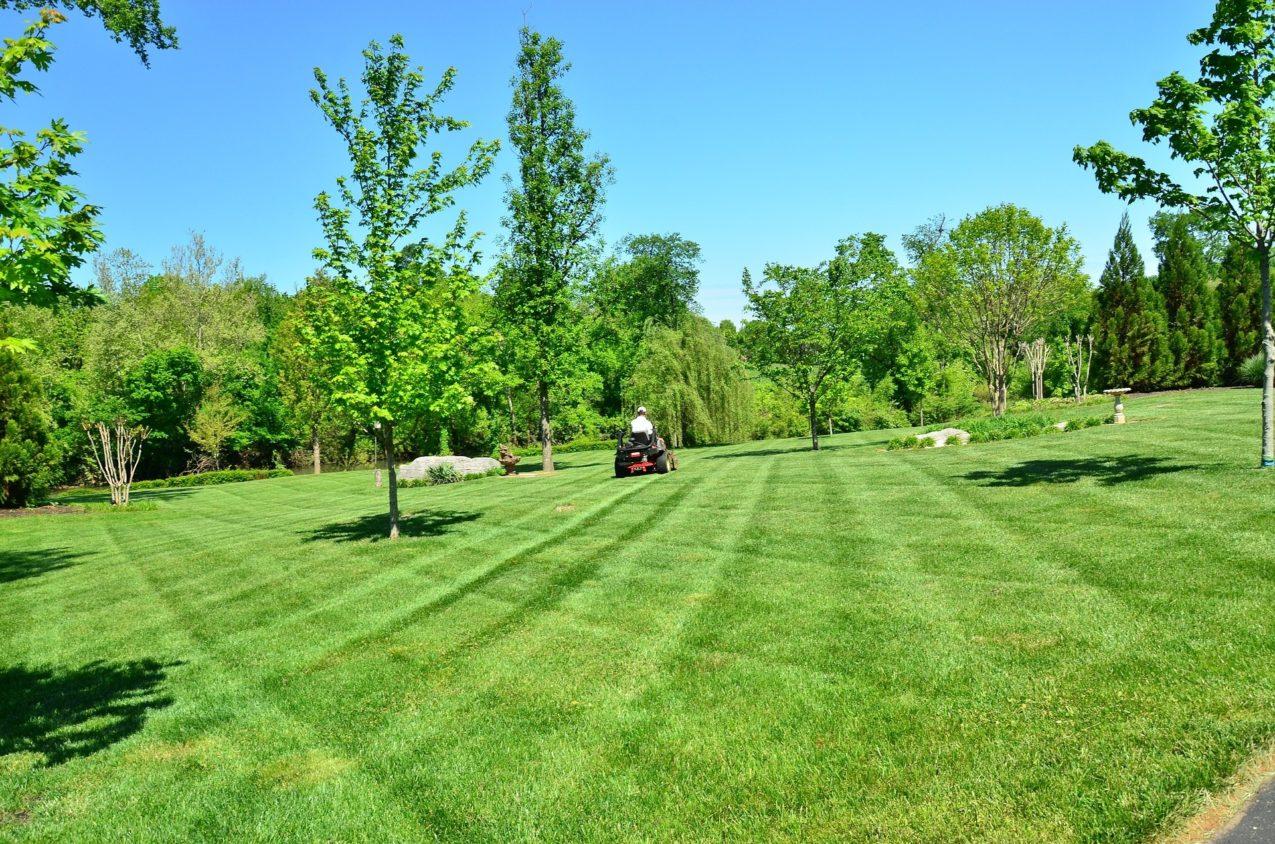 lawn-care-643557_1920